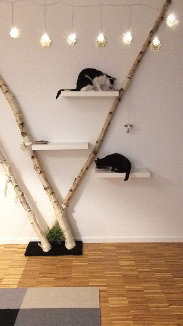 Birkenstämme als Kratzbaum   – Katzenstuhl