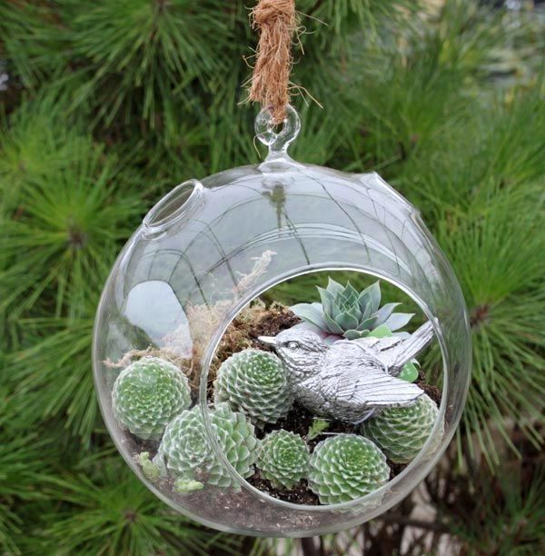 Hanging Glass Balls By Bbooky Succulents In Glass Glass Ball Hanging Glass Terrarium