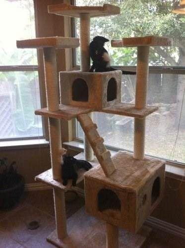 gatos mascota rascador                                                       …