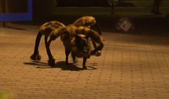 Perro Araña Causa Terror Entre Las Personas En Horas De La Noche #Video