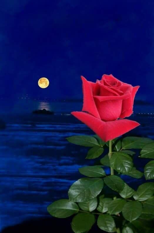 Валерий днем, открытки спокойной ночи с цветами розы