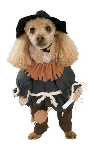Wizard of Oz Scarecrow Halloween Costume Pet ipawz.com