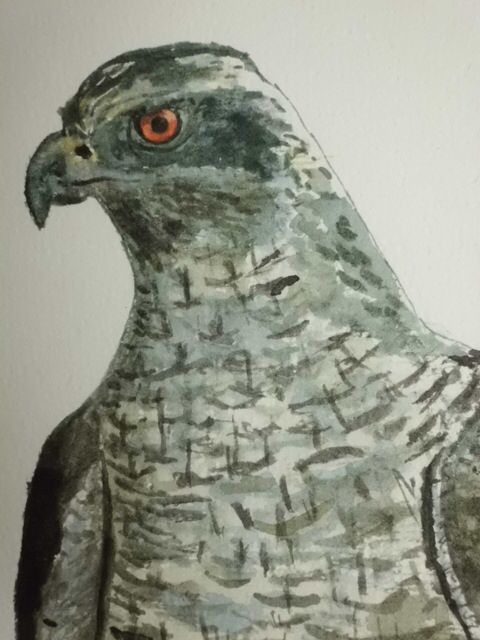 Bird of prey.          Watercolor.               Signed by Wilma                                     www.werkvanwilma.nl