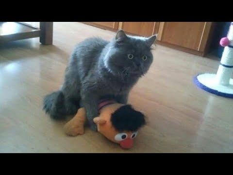 I WILL SELL my kidney if you don't laugh - World's Funniest CAT compilation - YouTube