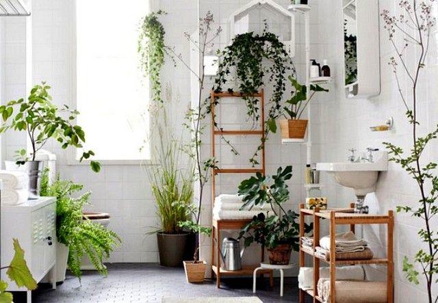 cadre végétal avec diversité de plantes