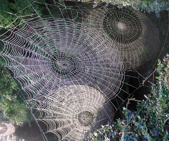 #Spiderwebs~Love to look at spider webs and would say this is about the coolest set of spider webs I've seen.