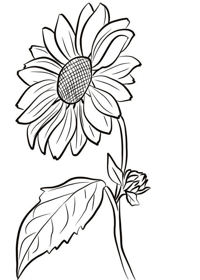 ausmalbilder sonnenblumen  blumen ausmalbilder