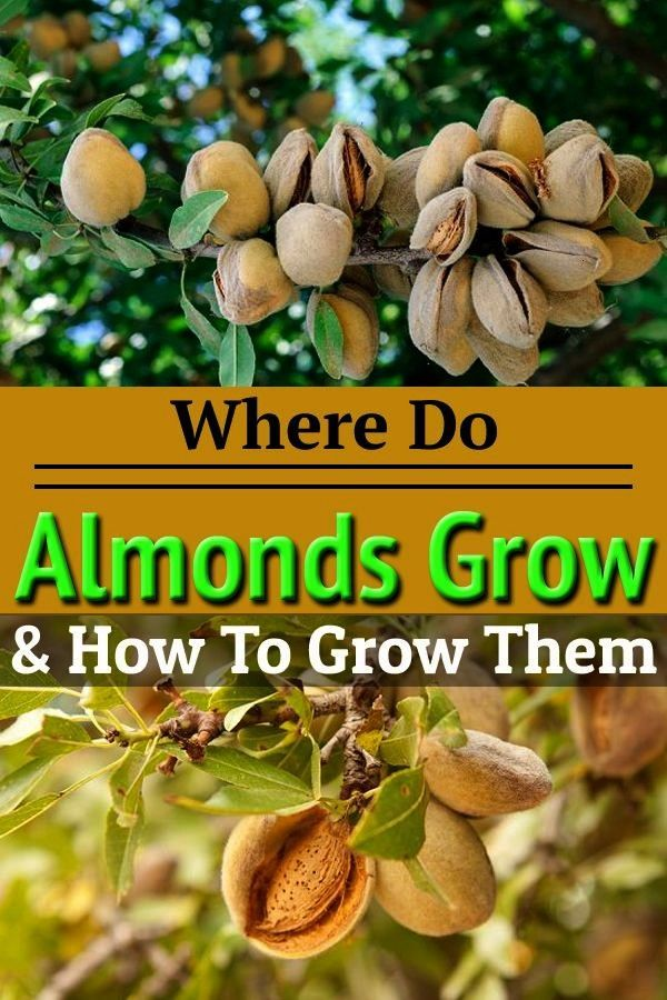 Pin By Roxanma Durmel On Outdoors In 2020 Where Do Almonds Grow Easy Vegetables To Grow Growing Vegetables