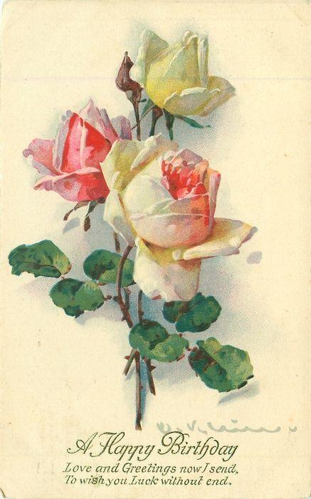 Happy Birthday postcard, white & pink roses ~ Catherine Klein, 1928