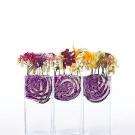 contemporary vegetable - 岡寛之 hiroyukioka design +1ichi