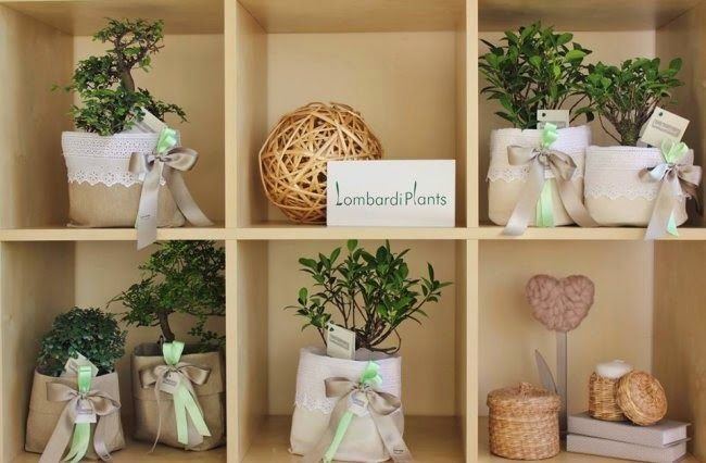 BOMBONIERE 2014: BONSAI E PIANTINE GRASSE COME CADEAU DEL MATRIMONIO  By www.SomethingTiffanyBlue.com #BOMBONIERE #WEDDING #MATRIMONIO