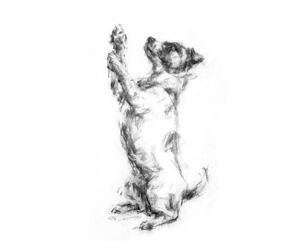 Jack Russell Terrier  fine art dog print by paintmydog on Etsy, £20.00
