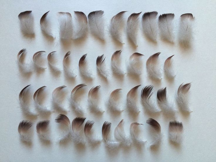 40 Natural Brown + White Craft Feathers 3 - 5cm Small Mixed Bag Bird Duck