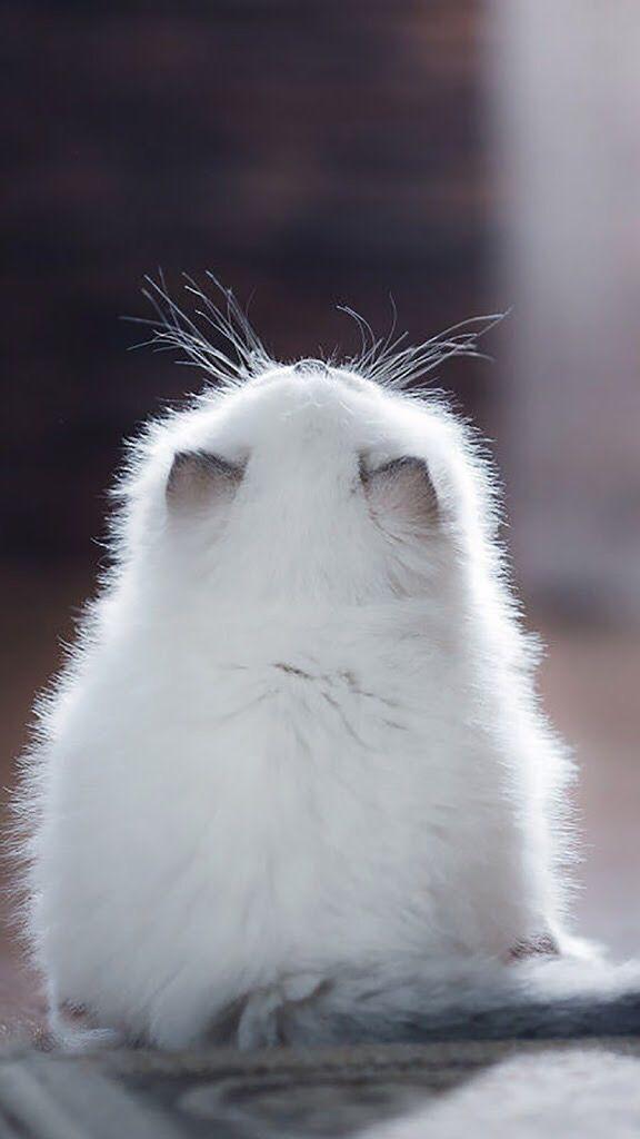 fluffy                                                                                                                                                     More
