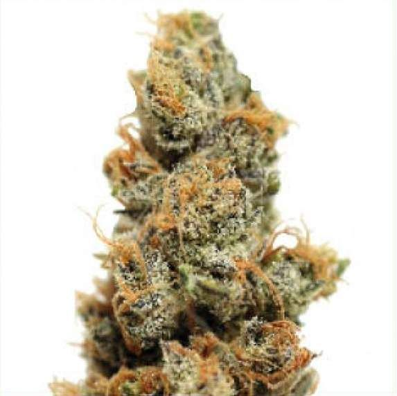 Barney's Farm Pineapple Chunk is an all-indica hybrid of several popular strains: Pineapple crossed with Cheese x Skunk #1. the purpose was to merge the flavours and aromas of these two classic strains into a single, explosive cannabis experience.  http://www.cannabis-seeds-store.co.uk/feminised-seeds/barney-39-s-farm/pineapple-chunk-feminised-seeds/prod_276.html