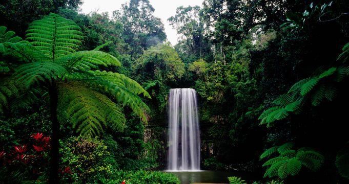 Millaa Millaa Falls on Atherton Tablelands.