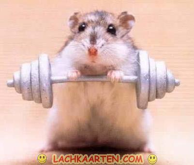 Gewichtheffen voor kleintjes