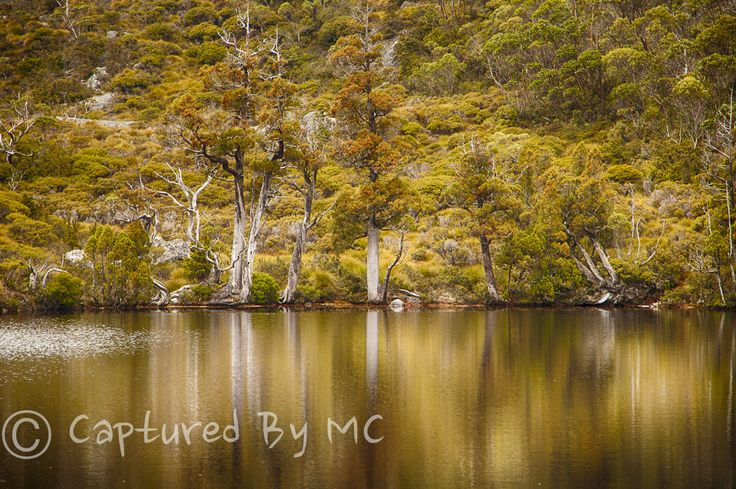 Pencil pine reflections, Tasmania