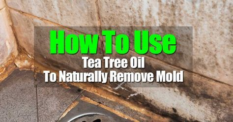 If mold is an issue in areas of your home like a shower, you are probably anxious to get rid of it as it is unsightly and can be harmful. There is good news. You do not have to use harsh chemical substances to get rid of mold. Tea tea oil is a wonderful, natural …