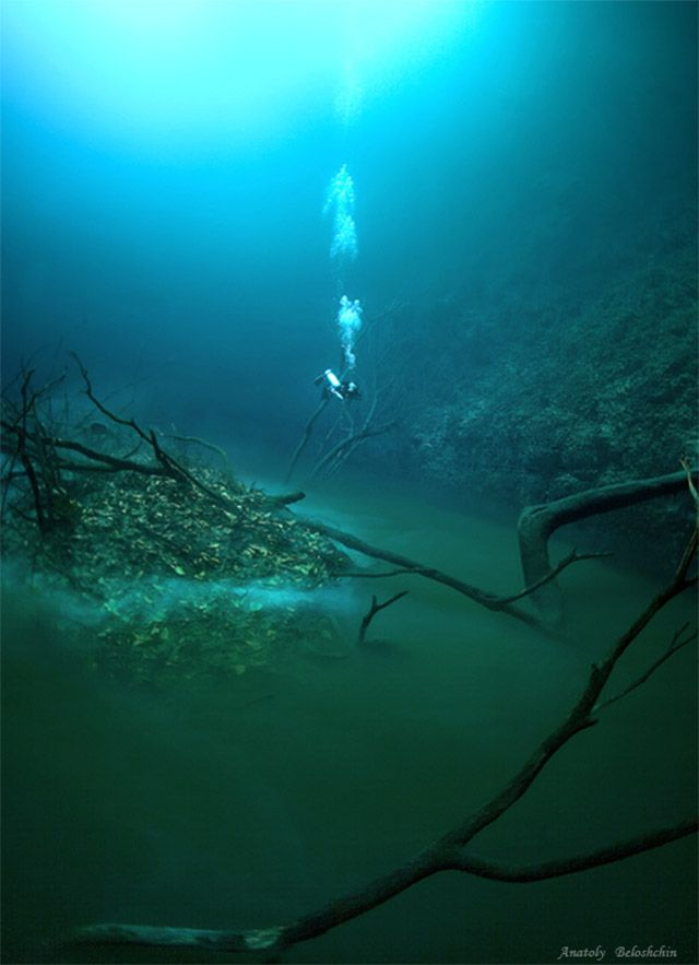 """Cenote Angelita: An Underwater River, Mexico. The river is actually a sort of illusion due to a phenomenon called a halocline. This """"river"""" is a dense layer of saltwater resting at the bottom of a cave."""