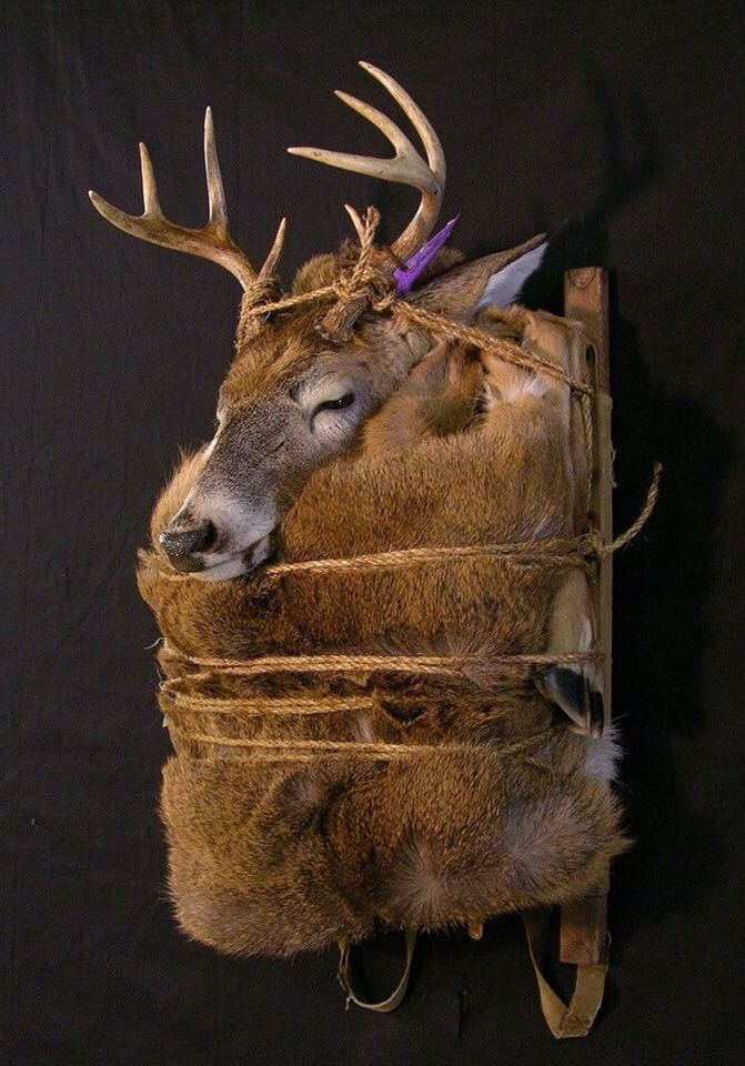 60 Best Taxidermy Mounts Images On Pinterest Taxidermy