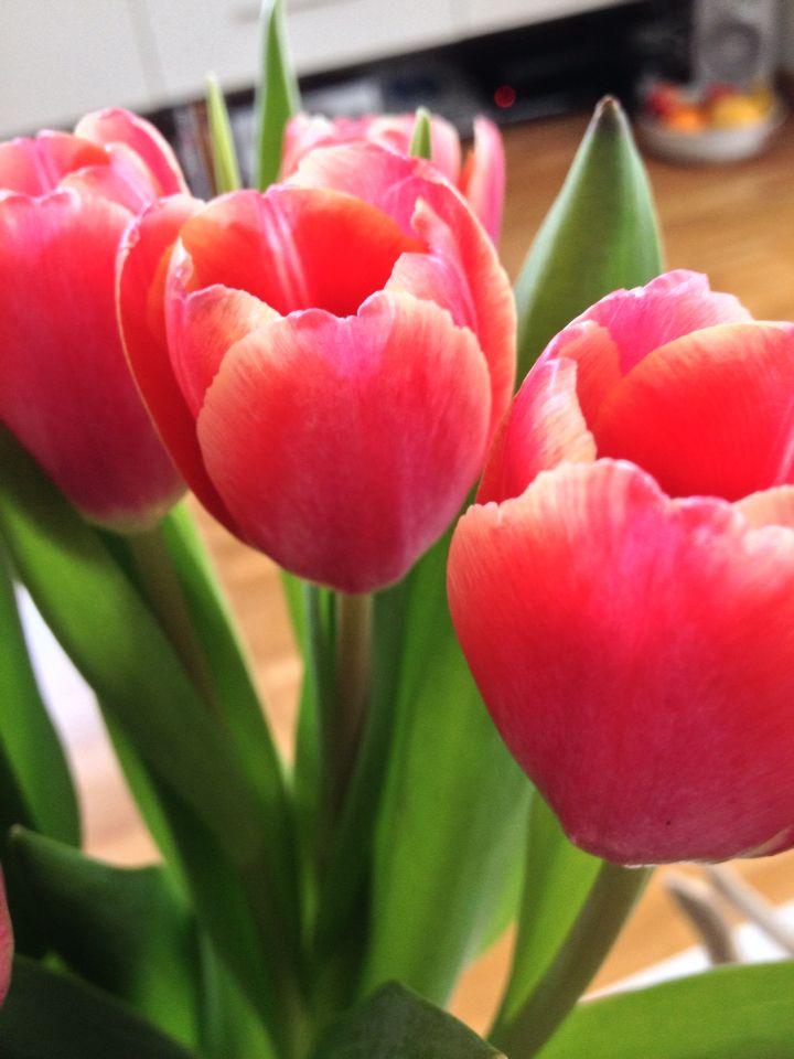 Tulip Love <3