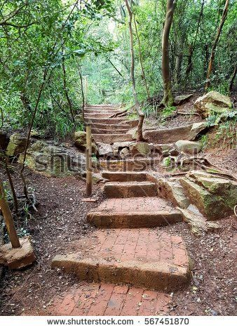 Pathway and steps running up mountain through forest in South Africa