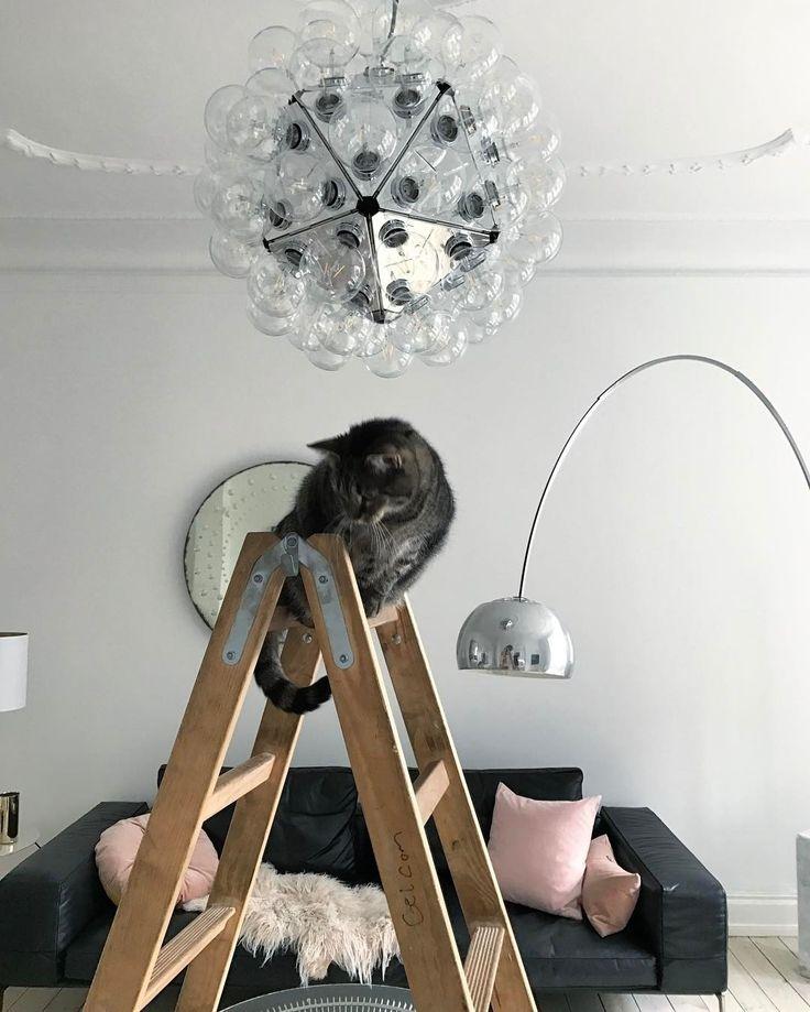 #котики - это первые #помощники во всем :) особенно при замене лампочек #фото @annikavonholdt #котэ #galleria_arben #decoration #ткани #cat