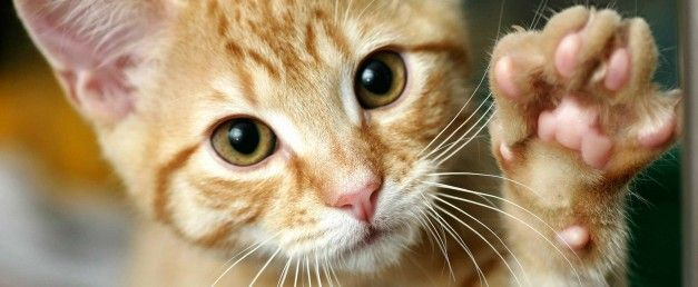 L'ansia da separazione tra cane e gatto.  Consigli pratici per evitare che micio si agiti in assenza di fido