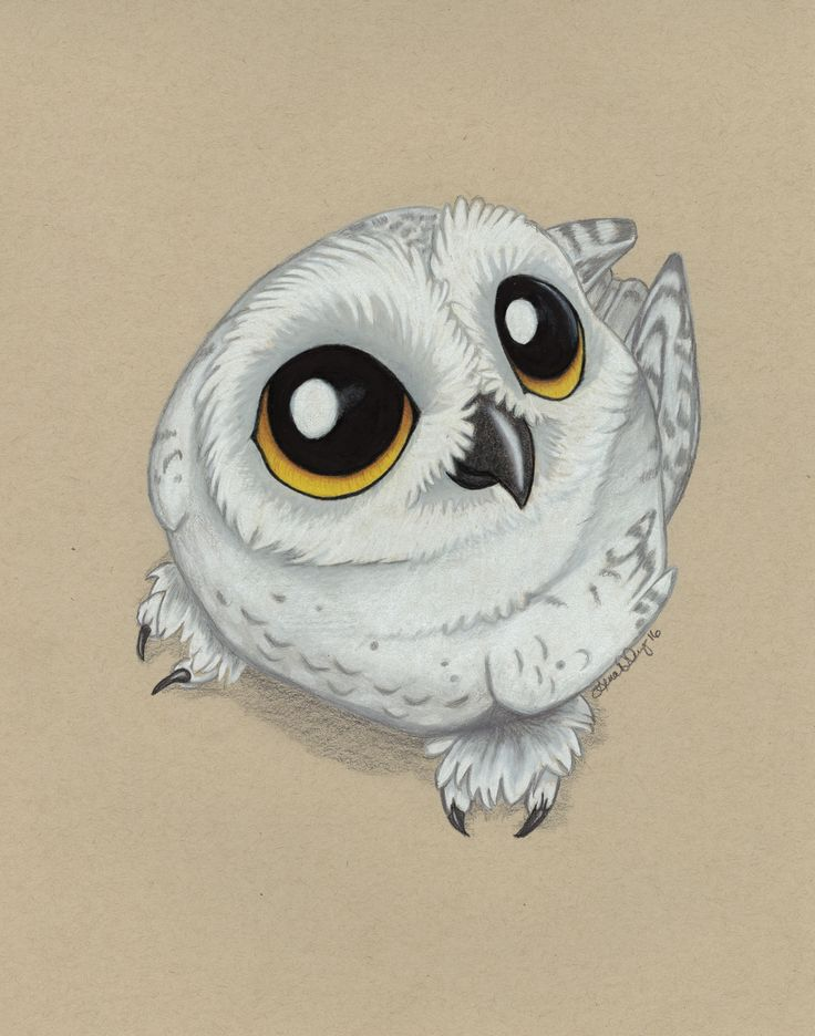 Hedwig - Print