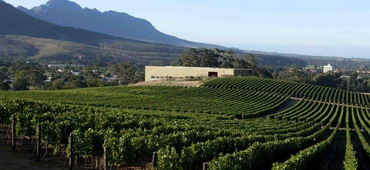 Glenelly Vineyards, Stellenbosch, South Africa www.bcfw.co.uk