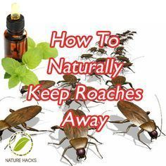 How To Naturally Keep Roaches Away --- Peppermint oil and cypress oil are the most popular oils that can be used as cockroach repellents. Mix 8 drops of cypress oil in half a cup of water and add about 10 drops of peppermint oil to this mixture. Mix the o