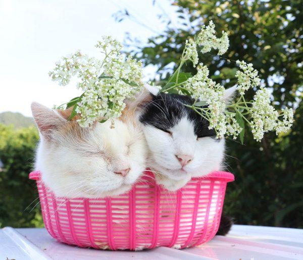 ちびず おしゃれまとめの人気アイデア Pinterest 우유 かご猫 にゃんこ 動物 かわいい