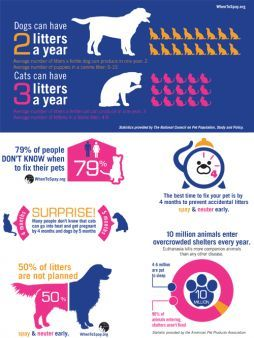 Facts on Spaying and Neutering.