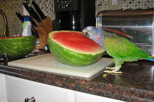 cool pillow: Funny Animals, Funny Stuff, Funnies, Humor, Watermelon, Birds