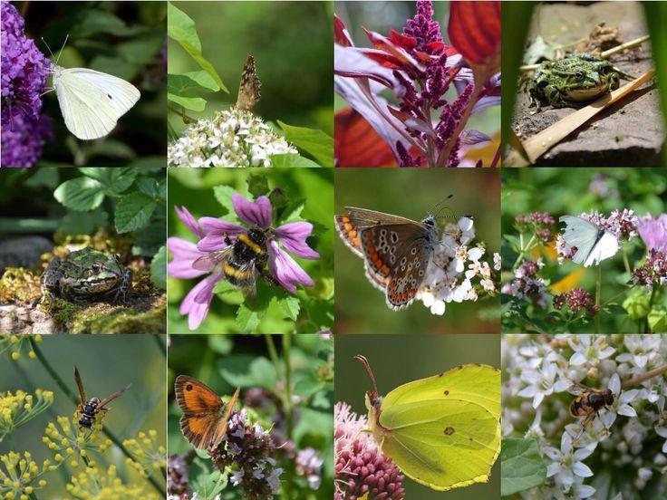 Beestjes in de moESCHtuin op een zomerse dag in Juli.....