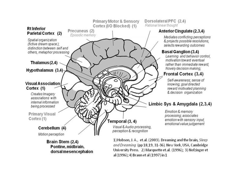 Right Brain Map