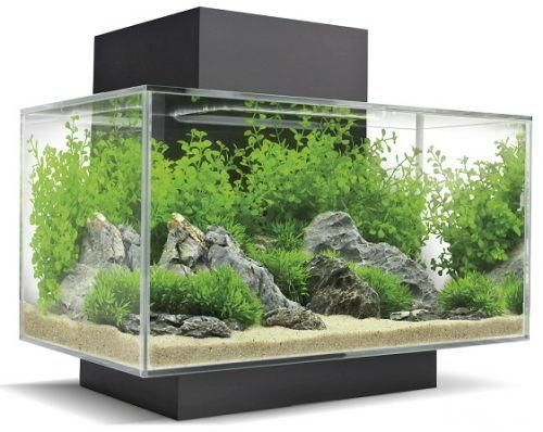 "The Fluval Edge fish tank has a unique and elegant design that is sure to turn heads. This all glass aquarium provides a unique look with a contemporary setting. The partially sealed top reduces evaporation for less maintenance and a large, hidden aperture allows oxygen exchange to keep fish healthy. The light fixture creates a bright, directional light source for a beautiful 'shimmer' effect across your entire aquatic scene. It also retracts, allowing access to a 7"" x 4 3/4..."