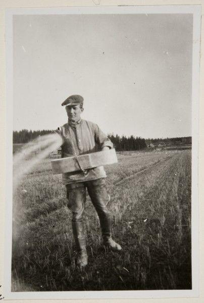 """""""kahlakkakylvö"""", kylväjänä Aarne Kaltula. Oksanen Aino, kuvaaja 1928"""