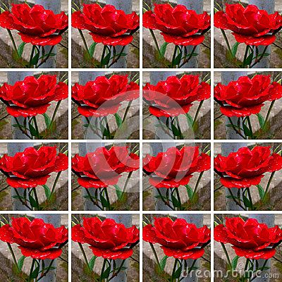 #Background made of square shapes each filled with one #red #rose with #rain #drops on it