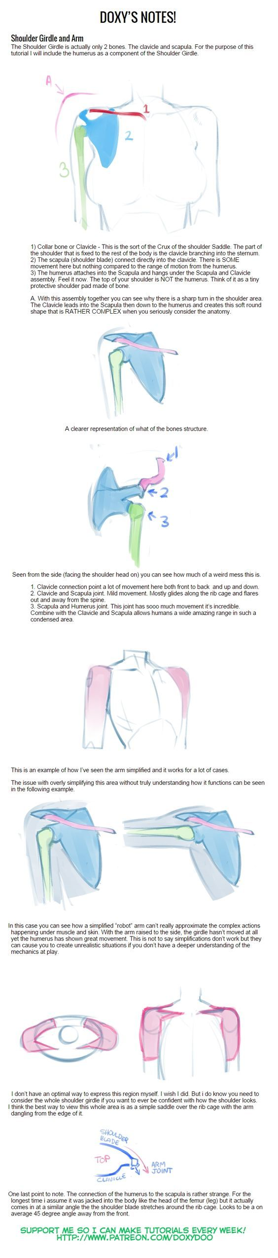 Shoulder Girdle Tutorial