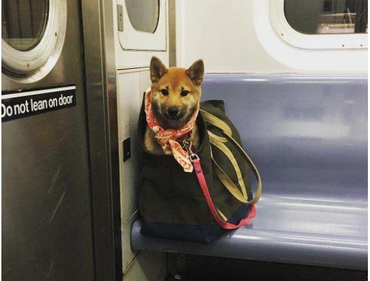 3年くらい前に決められたルールらしいですが、改めて禁止されてないあたり地下鉄の方もユーモアがある感じがしますね。