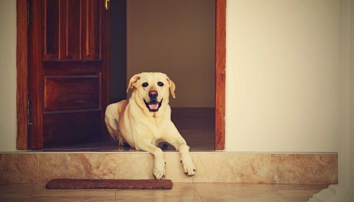 Ask a Dog Sitter: Dog Sitting Rates & Dog Sitter Salary - Top Dog Tips