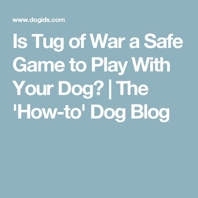 Is Tug of War a Safe Game to Play With Your Dog? | The 'How-to' Dog Blog