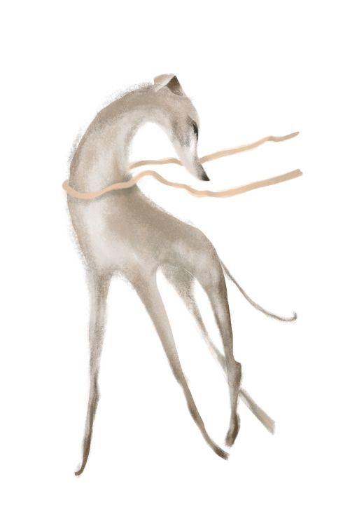 g - greyhound