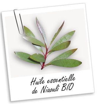 Huile essentielle de Niaouli : 2,50 euros sur Aroma-Zone
