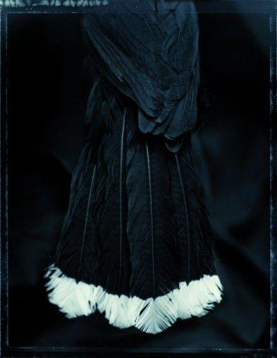 taonga ou « trésors maori » les plumes de huia évoquent l'esprit de cet oiseau aujourd'hui disparu que les Maori associaient à la sagesse et à la force et que seuls les chefs avaient le droit de porter. Fiona Pardington a consacré une série à des spécimens conservés dans des collections d'histoire naturelle dialoguant entre les cultures du passé et leurs vestiges.