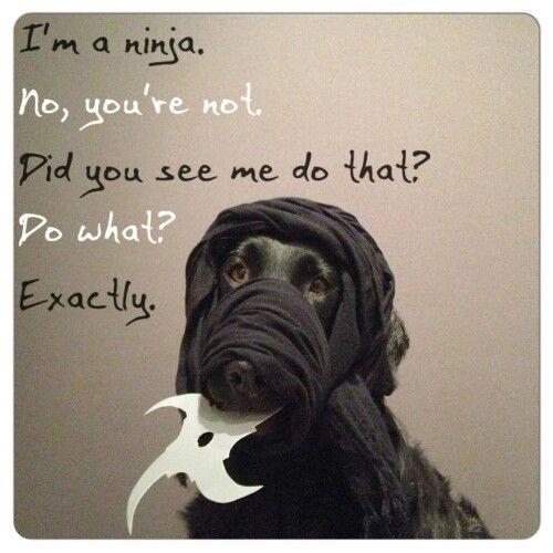 Ninja.