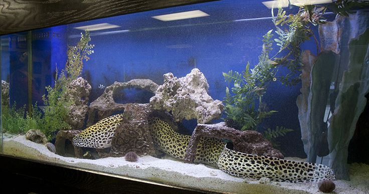fish tank with eel waiting room decorating ideas - Google Search