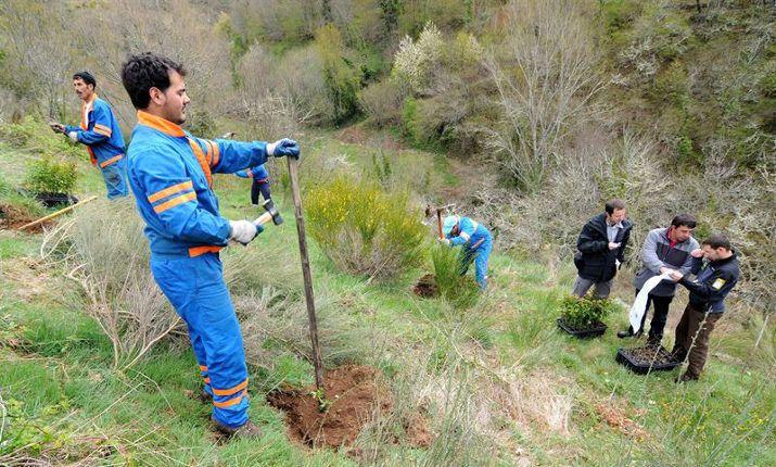 La Fundación Oso Pardo ha plantado 110.485 árboles para alimentar a la población de osos